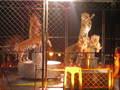 Hamid circus performing tigers